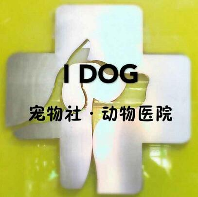 宠物医疗实习生《工作地点:南关区》