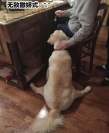 狗子的百怪睡姿,看的令人笑到停不下来!
