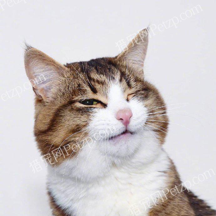 撒娇的大脸猫r