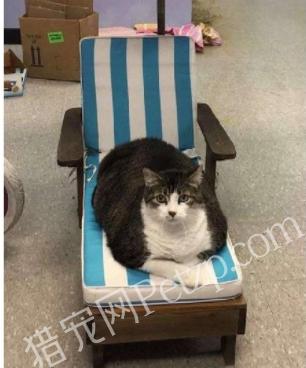 26斤 网红猫Fat Fred的走红史!