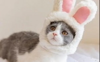 日本网红猫咪离世,加拿大兽医提出暖心警告,忠狗获救反冲向火场
