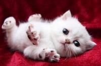 当你感觉自己猫咪不正常时,一定要重视!