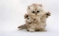 接猫咪回家需要做哪些准备呢?