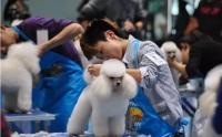 宠物美容师的红利已经过去了吗?