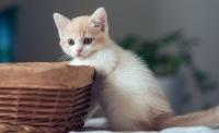 养猫那些你不知道的冷知识!