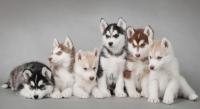 宠物医生招聘有哪些条件?
