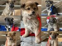 流浪狗被冻死前紧紧抱着7只宝宝,义工:花了两天时间才把它们分