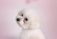女孩子学宠物美容好不好?去哪里学习宠物美容?