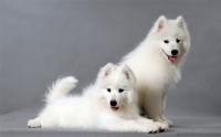 北京宠物美容培训:学宠物美容大概多少钱