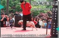 训犬学徒不收费,孙亮连锁品牌培训学校,为了培养自己的训犬团队,现对外招学徒不收费
