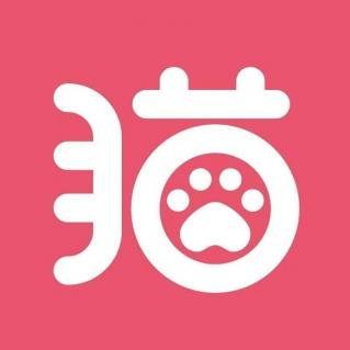 上海爱洗澡的猫(猫咪连锁店)