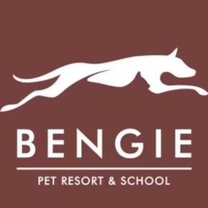 上海Bengie宠物酒店和学校