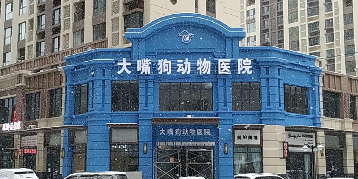 辽宁丹东大嘴狗宠物医院